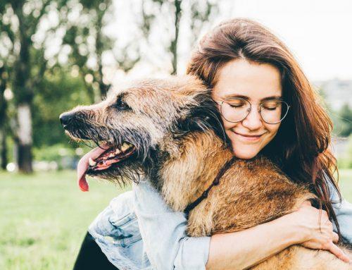 Canine Pet Care 101